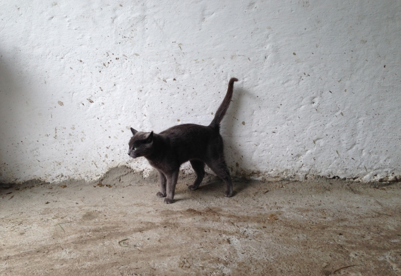 Bogota Katze