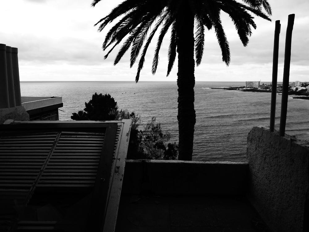Hotel Neptuno Palmtree bw