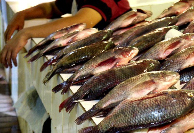 Kuwait Souq Fish