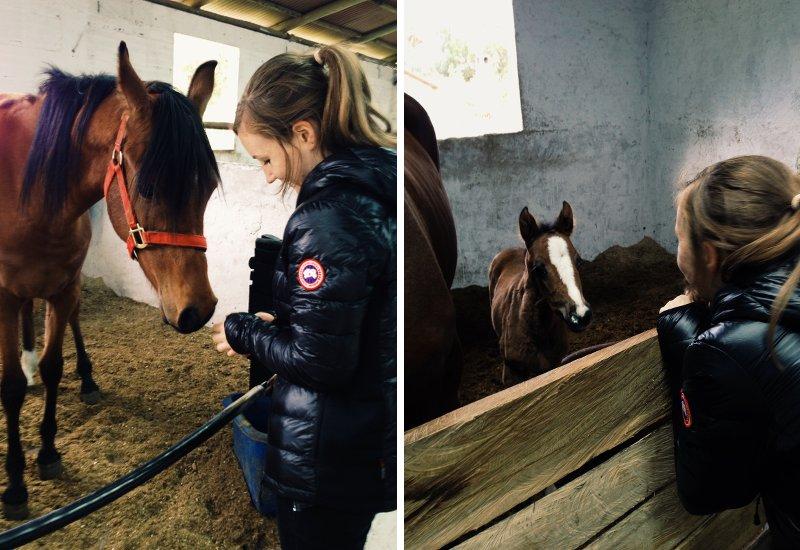 Lisa Mattis Pferdemädchen