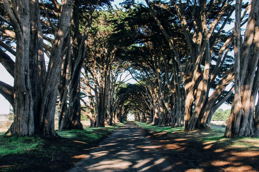 pointreyes_treetunnel_3