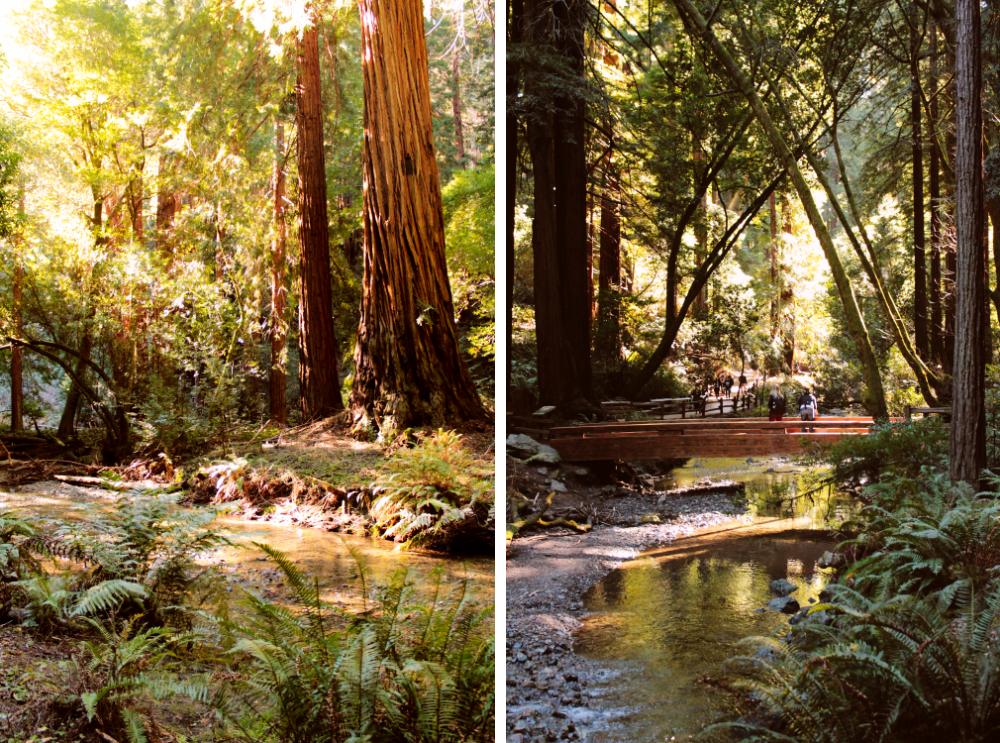 San Francisco Muir Woods Redwoods Forest Highway 1